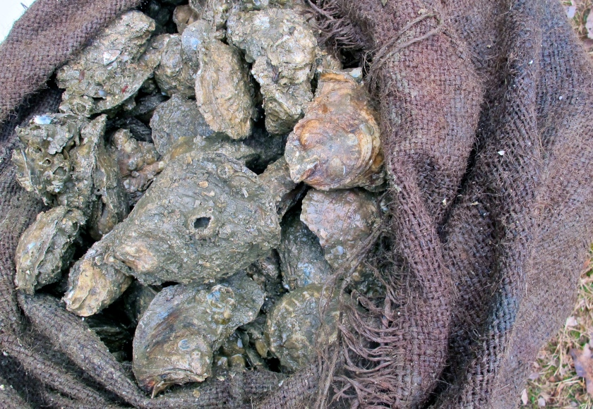 OysterBag