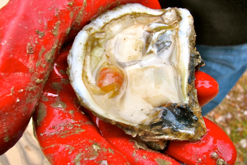 OysterCrab