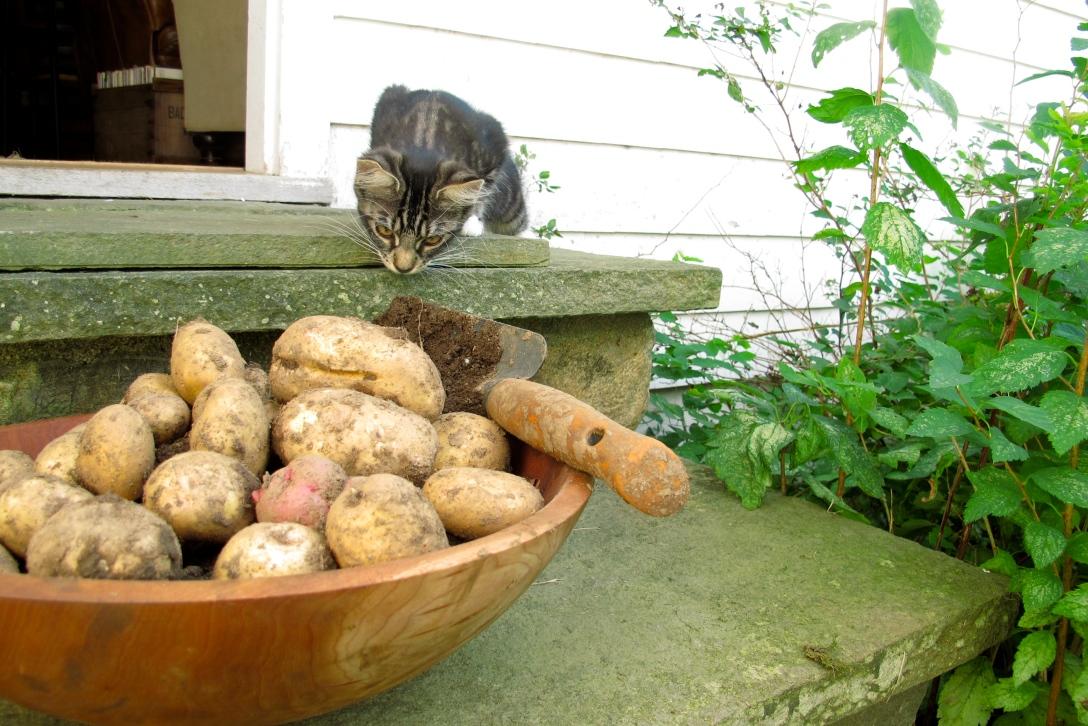 lilyandpotatoes