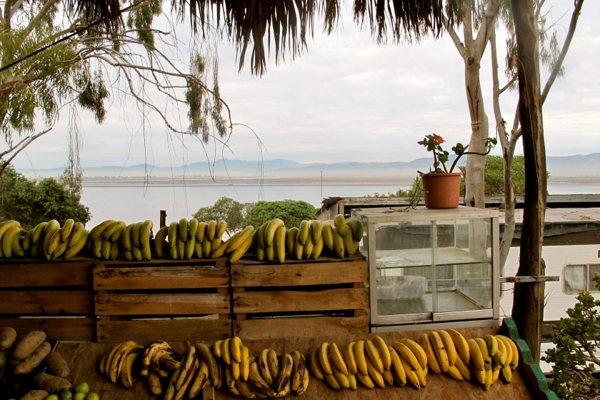 MexicoBananas