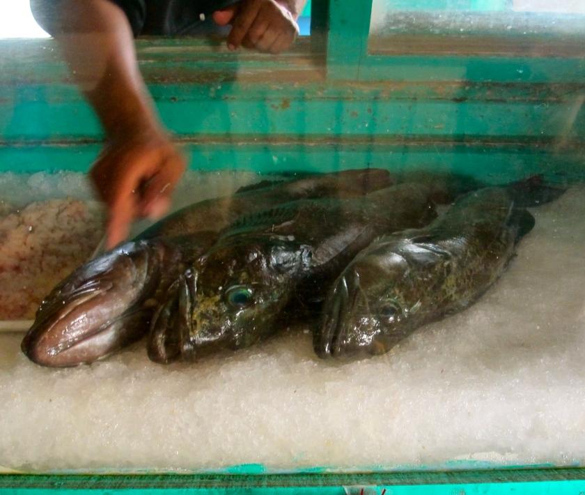 MexicoCodFish