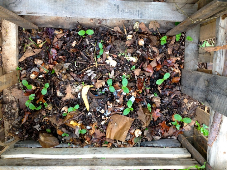 CompostSprouts