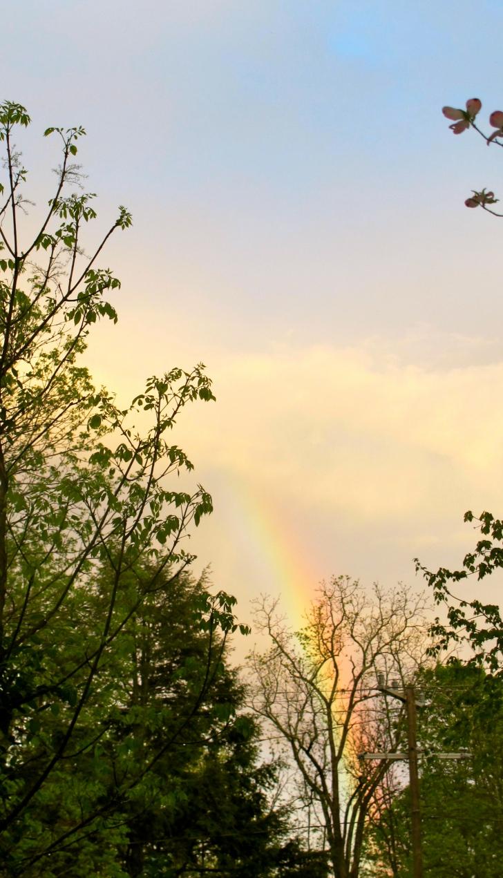 RainbowVirginia