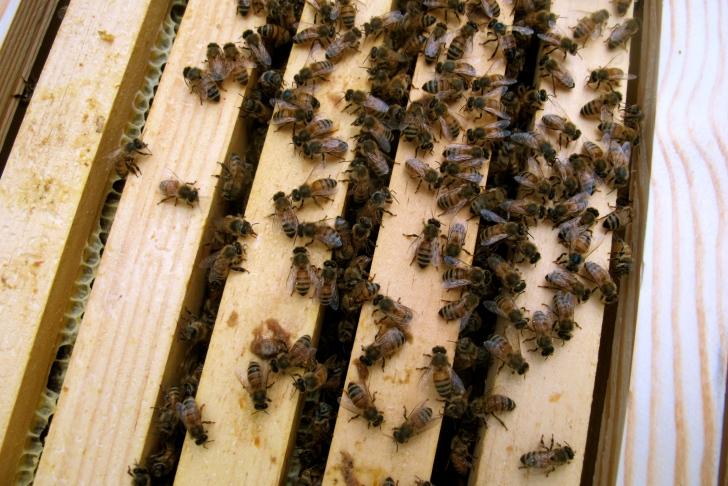 BeesOnFrames