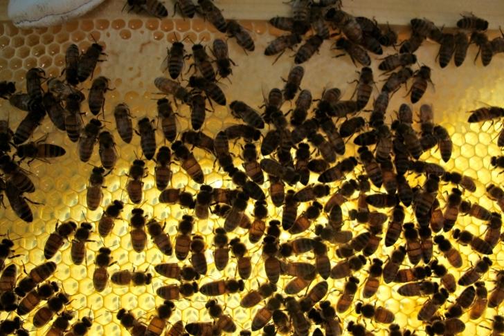 honeycombhiveinspection