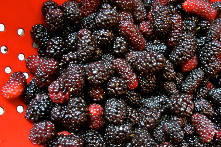 pickedmulberries