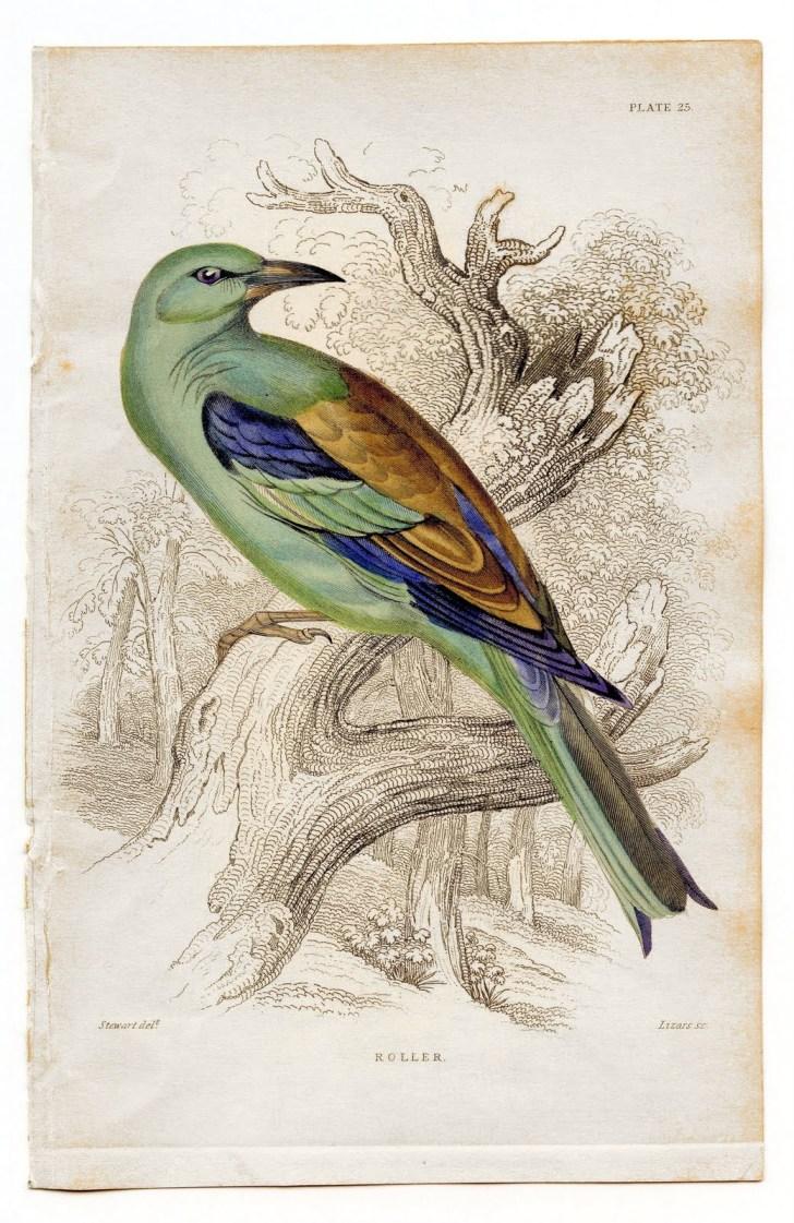 birdcolorfulgfairy006b
